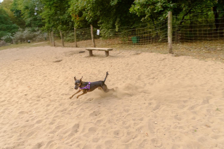 Wybieg dla psów przy Rusałce