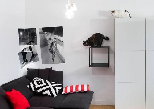 koty lubia grid