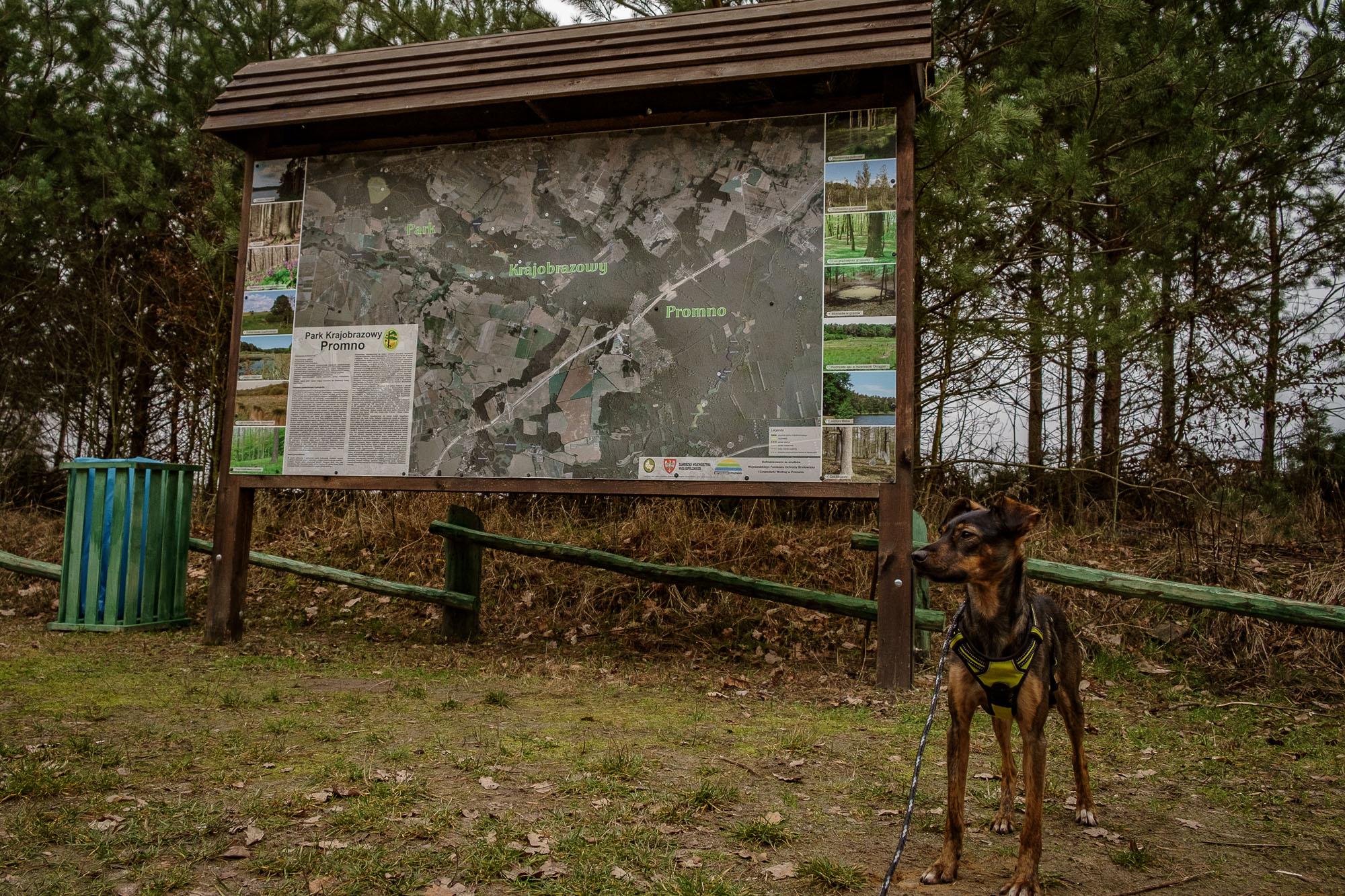Park Krajobrazowy Promno: początek