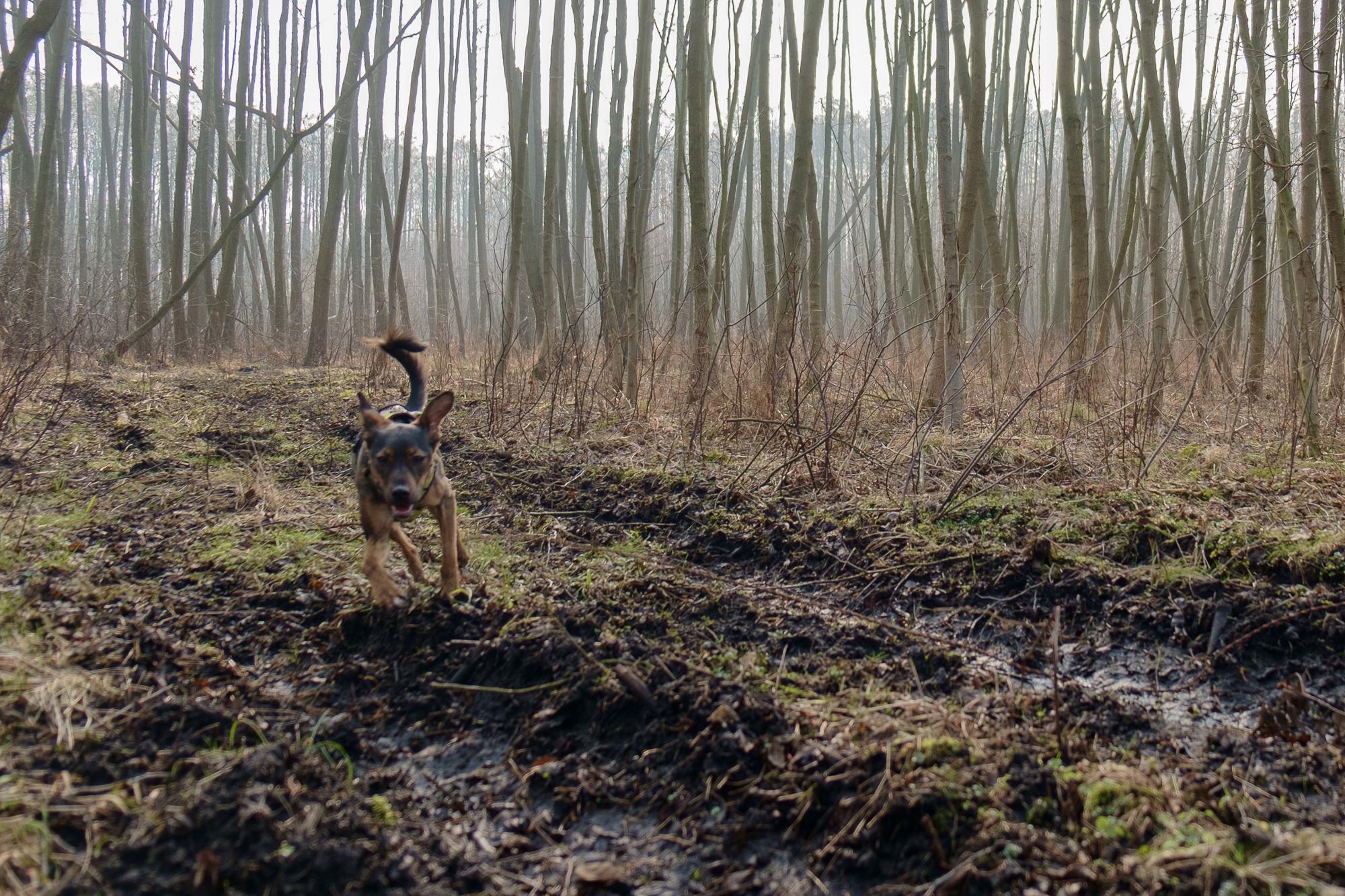 Trochę inny las: Czmoń