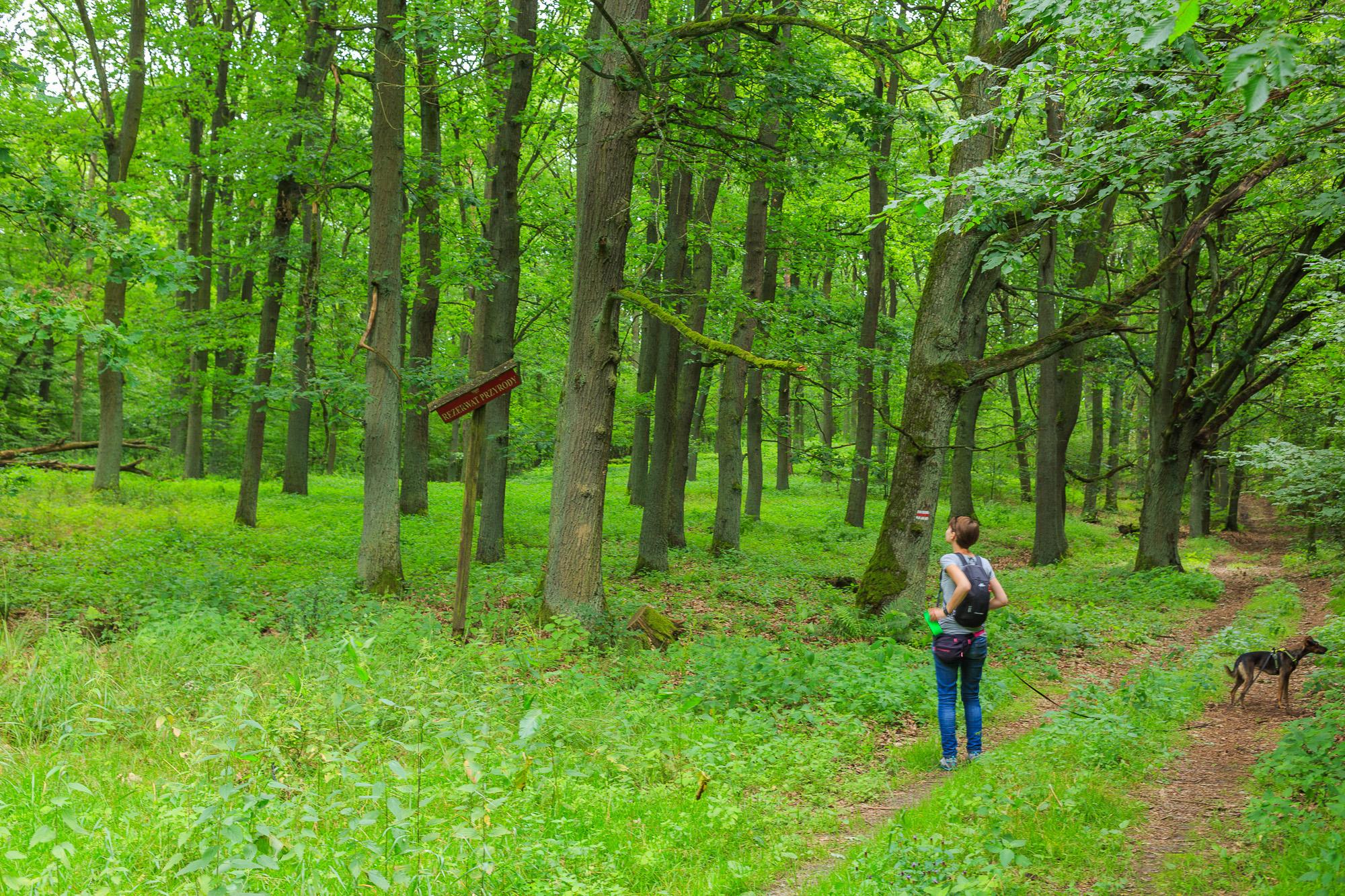 Kamionna: Rezerwat przyrody Dolina Kamionki