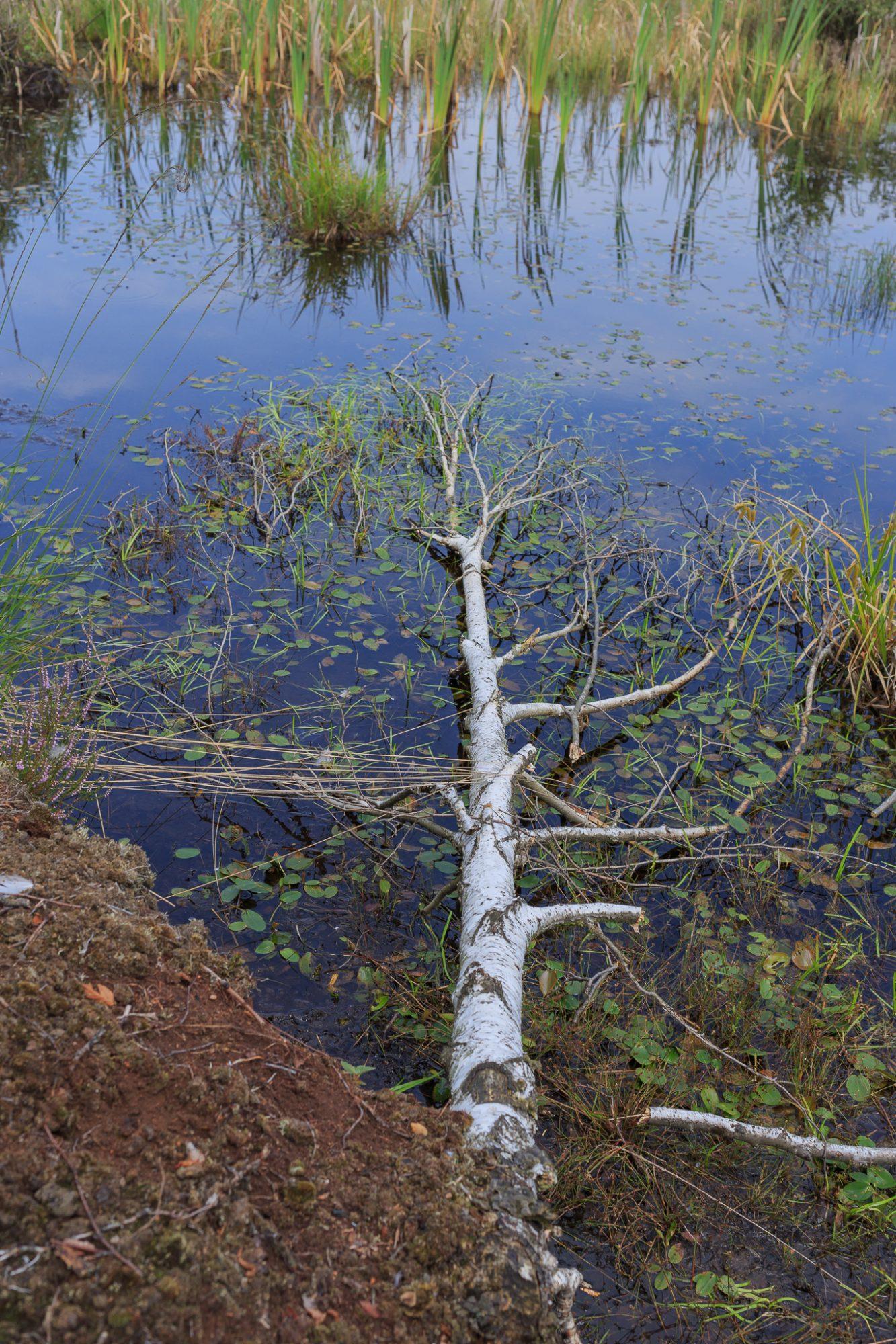 Rezerwat przyrody Bagno Chlebowo