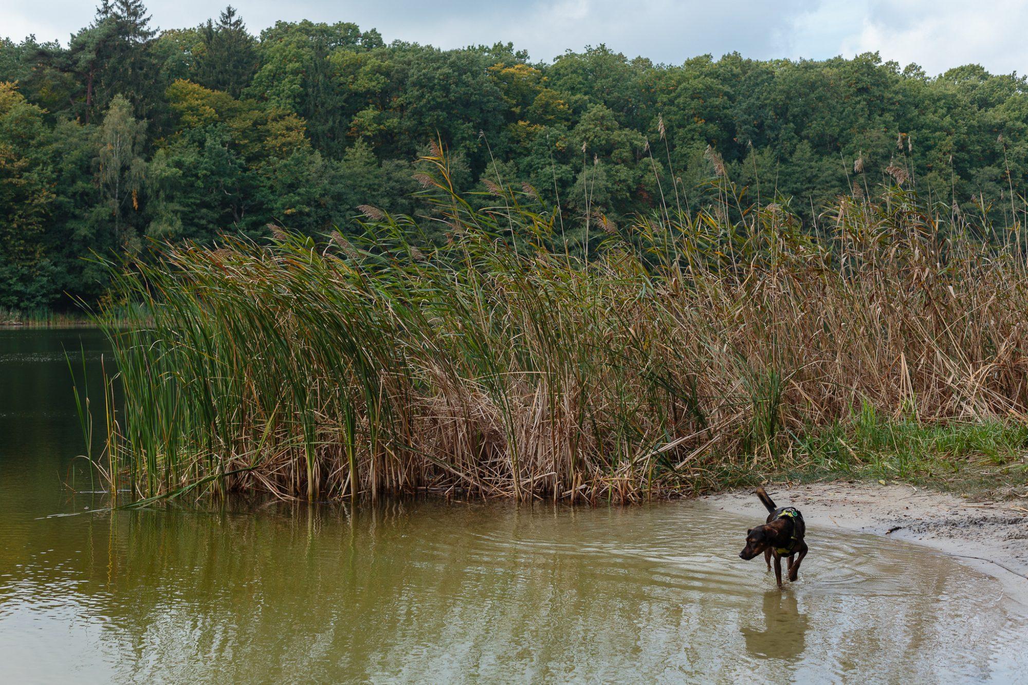 Wielkopolski Park Narodowy: Jezioro Jarosławieckie
