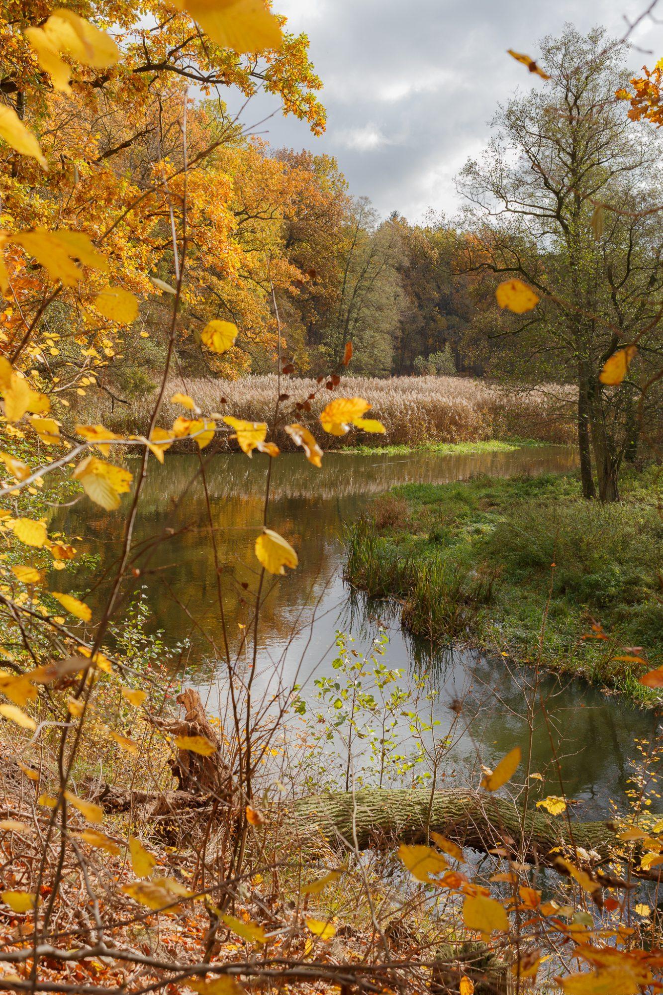 Dolina rzeki Wełny