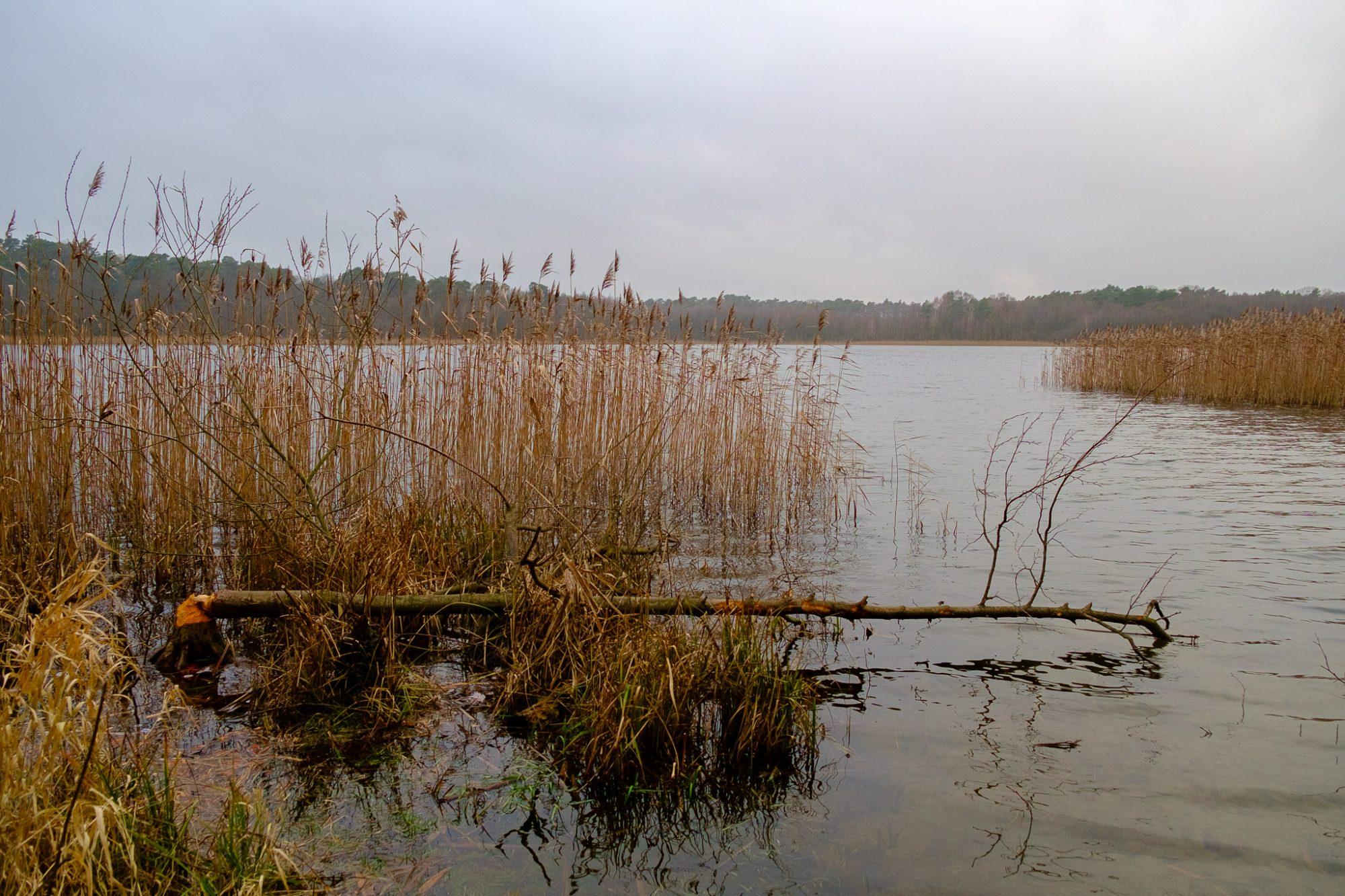 Jezioro Dębiniec plus ciekawostka