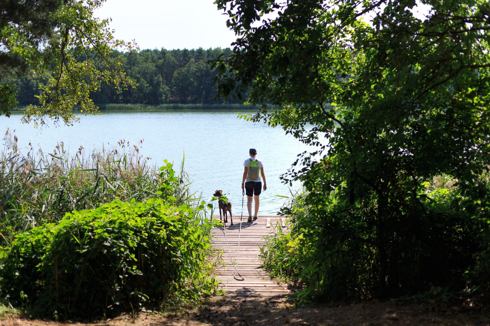 Przemęcki Park Krajobrazowy: Jezioro Olejnickie i jezioro Radomierskie
