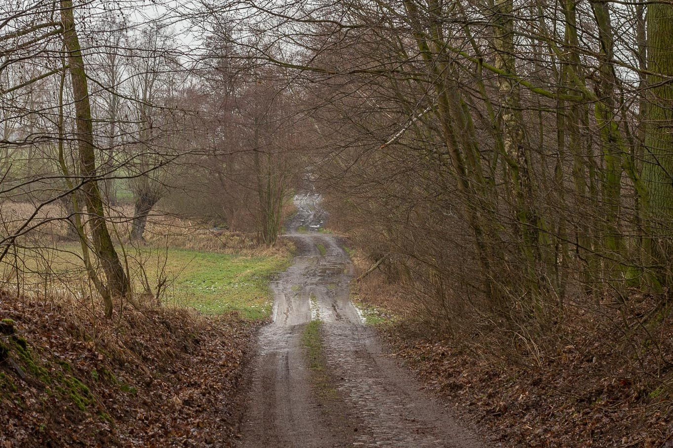 Dookoła lasu: Duszniki